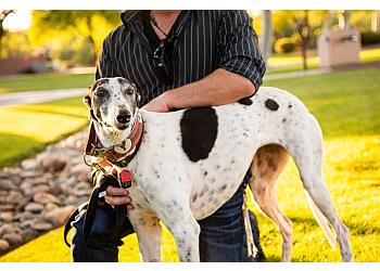 Tucson dog training Sol Dog Lodge And Training Center