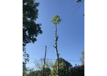 Pasadena tree service SouthEast Tree