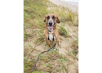 Norfolk dog walker South Paw Pet Services, LLC