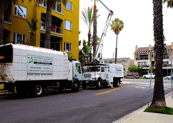 Torrance landscaping company Southern California Tree & Landscape