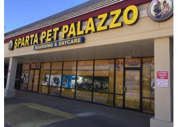 Plano dog walker Sparta Pet Palazzo