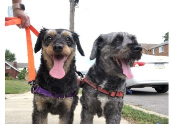 Pittsburgh dog walker Steel City Pet Sitters and Dog Walkers LLC