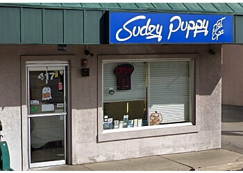 Naperville pet grooming Sudzy Puppy