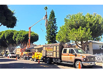 Santa Ana tree service Supreme Tree and Landscape Experts