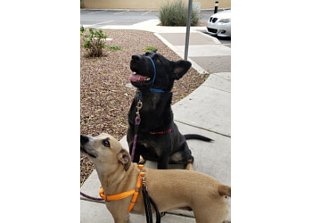 Glendale dog walker Tactical Pet Services & Equine