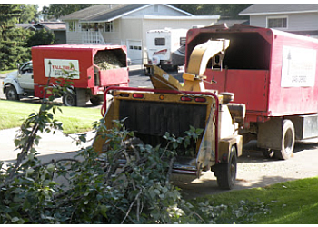 Anchorage tree service Tall Trees
