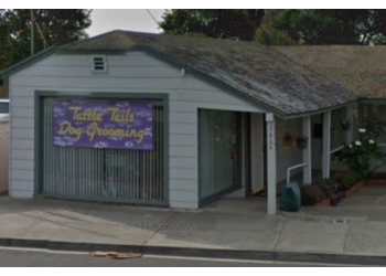 Fremont pet grooming Tattle Tails