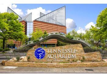 Chattanooga places to see Tennessee Aquarium