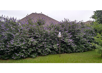 Houston tree service Texas Tree Team