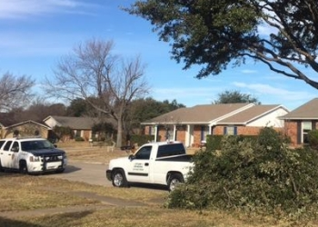 Mesquite tree service Texas Treehouse Tree Service