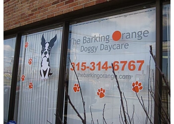 Syracuse pet grooming The Barking Orange