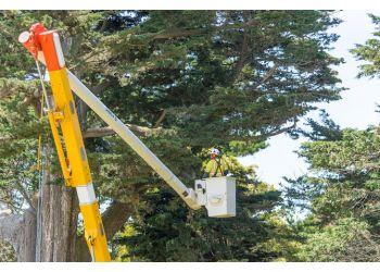 Baltimore tree service The Davey Tree Expert Company