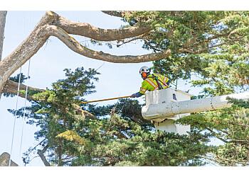 Columbus tree service The Davey Tree Expert Company