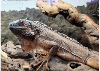 Huntington Beach places to see The Reptile Zoo