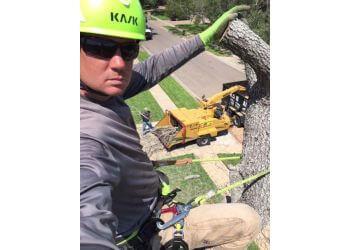 Corpus Christi tree service The Tree Amigos