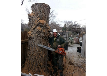 Reno tree service The Tree Professional