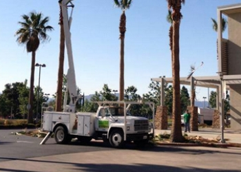 Victorville tree service The Tree Pros