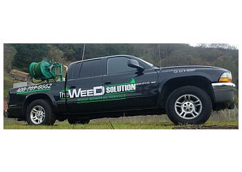 San Jose Lawn Care Service The Weed Solution