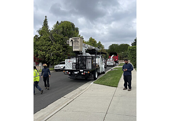 Los Angeles tree service Thrifty Tree Service Inc