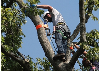 Murfreesboro tree service Timber Wolf Tree Service
