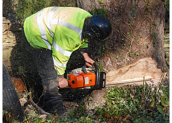 Garden Grove tree service Tom's A Plus Tree Trimming Topping & Removal