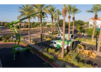 Chandler tree service Top Leaf Tree Service