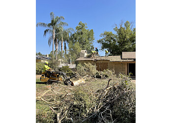 3 Best Tree Services In Fresno Ca