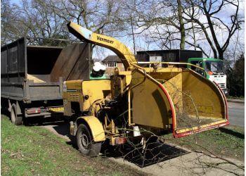 Surprise tree service Tree Service Surprise