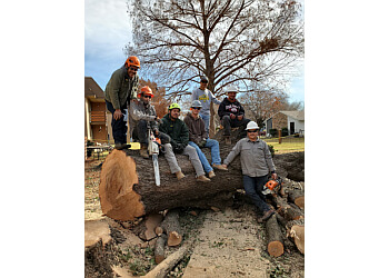 Arlington tree service TreeTop Tree Service