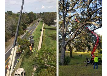 Orlando tree service Tree Work Now Inc