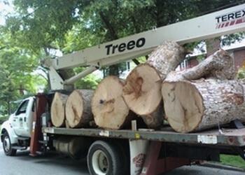 Indianapolis tree service Treeo Tree Service