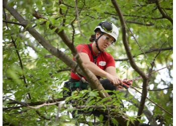 3 Best Tree Services In Richmond Va Threebestrated