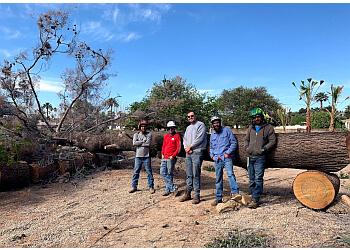Glendale tree service  Twilight Tree And Landscape Services