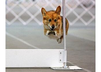 Minneapolis dog training Twin Cities Obedience Training Club