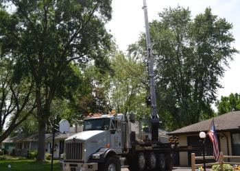 St Paul tree service Twin Cities Tree Care Professionals