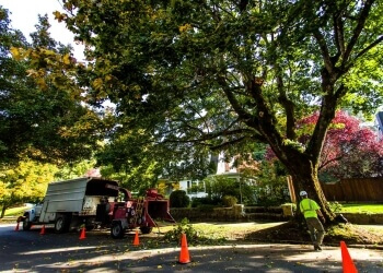 Portland tree service Urban Forest Pro