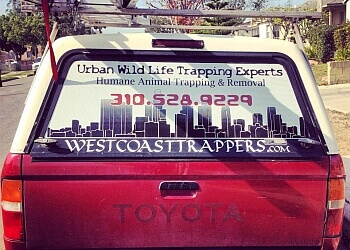 Los Angeles animal removal Urban Wildlife Trapping Experts