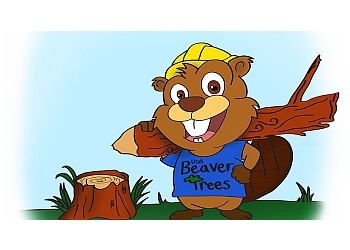 Provo tree service Utah Beaver Trees