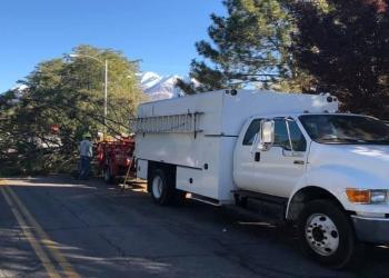 Provo tree service Utah Tree Works