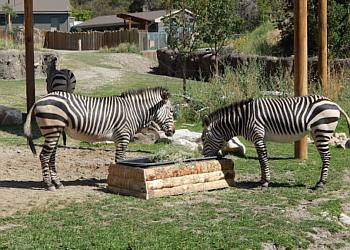 Salt Lake City places to see Utah's Hogle Zoo