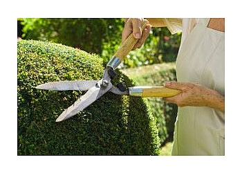 Moreno Valley lawn care service Vaca Landscaping