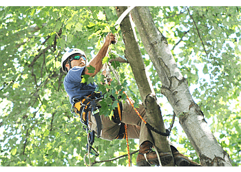 Gilbert tree service Valley Tree Masters
