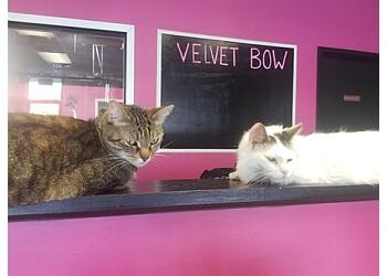 Joliet pet grooming Velvet Bow Pet Grooming