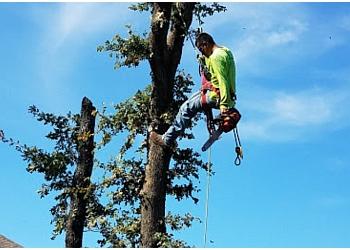 Denton tree service  WOODY'S TREE SERVICE