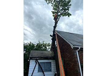 Detroit tree service Wades Tree Service