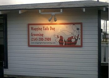Killeen pet grooming Wagging Tails