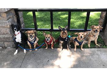 Riverside dog walker Waggy Trails
