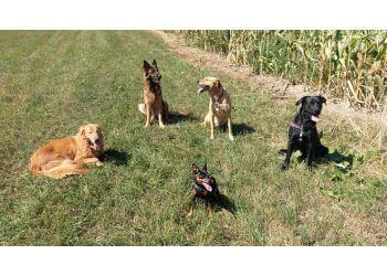 Rochester dog walker Walkin' The Dog