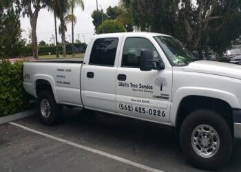 Long Beach tree service Walt's Tree Service