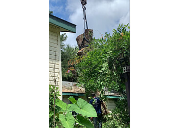 Jacksonville tree service Warming Tree Services, Inc.